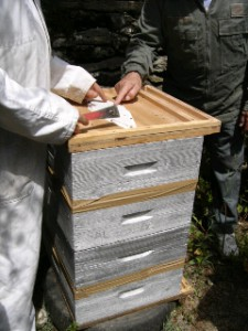 cours du syndicat de l'abeille limousine