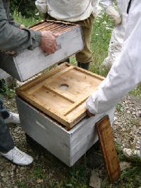cours d'apiculture par le syndicat du limousin l'abeille limousine