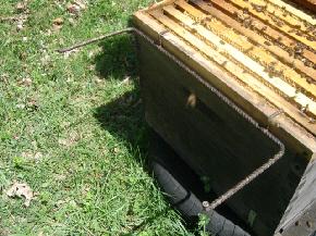 cours d'apiculture du syndicat apicole du limousin