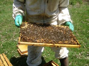 cours du syndicat apicole l'abeille limousine