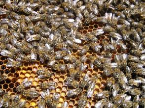 """cours au rucher du syndicat apicole du limousin l'""""abeille limousine"""""""
