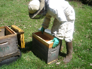cours au rucher - abeille limousine