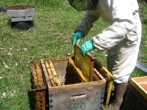 cours au rucher du syndicat l'abeille limousine