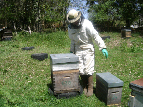 cours au rucher du syndicat apicole du limousin