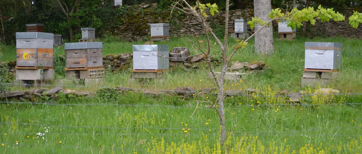 apiculteur correze